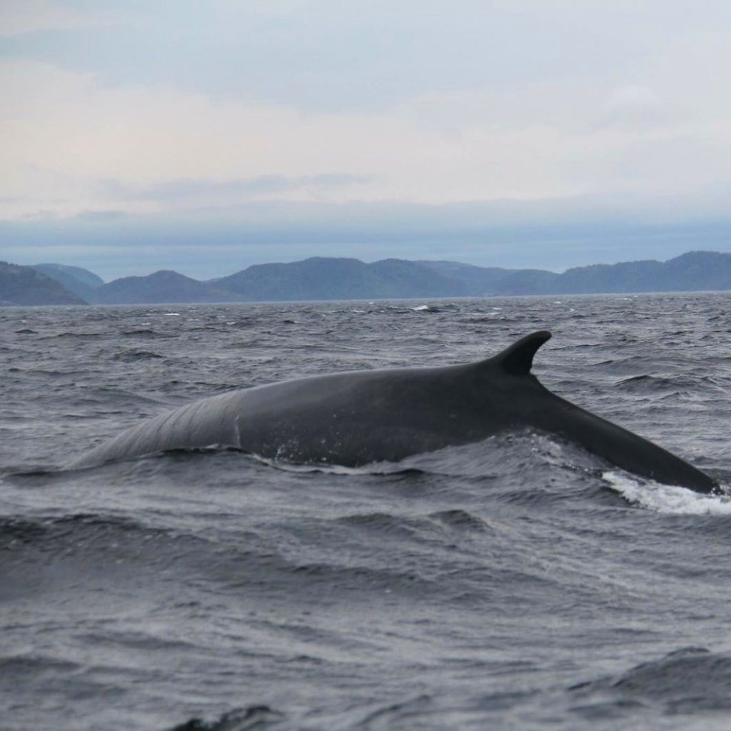 My (literally...) biggest highlight of this trip: a fin whale.