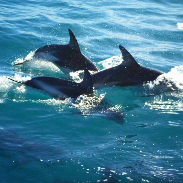 We also saw a pod of dusky dolphins so many!hellip