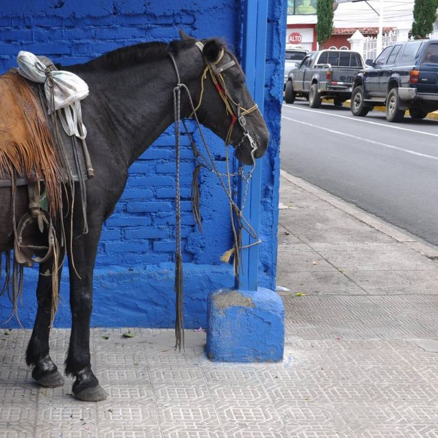 Nicaragua the country where horses are parked on the streethellip
